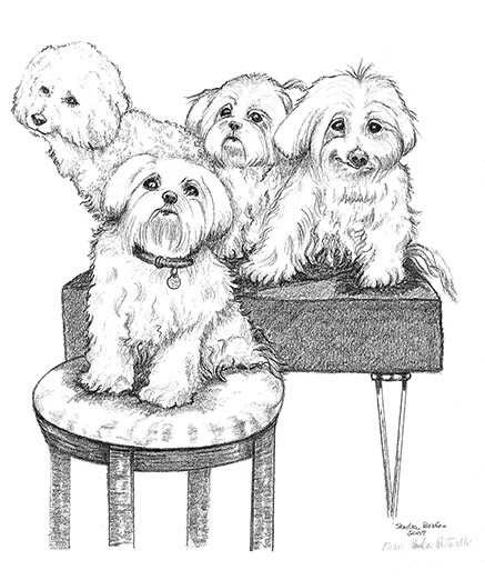 Maltese and Poodles
